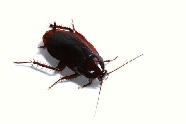 ひっくり返る ゴキブリ
